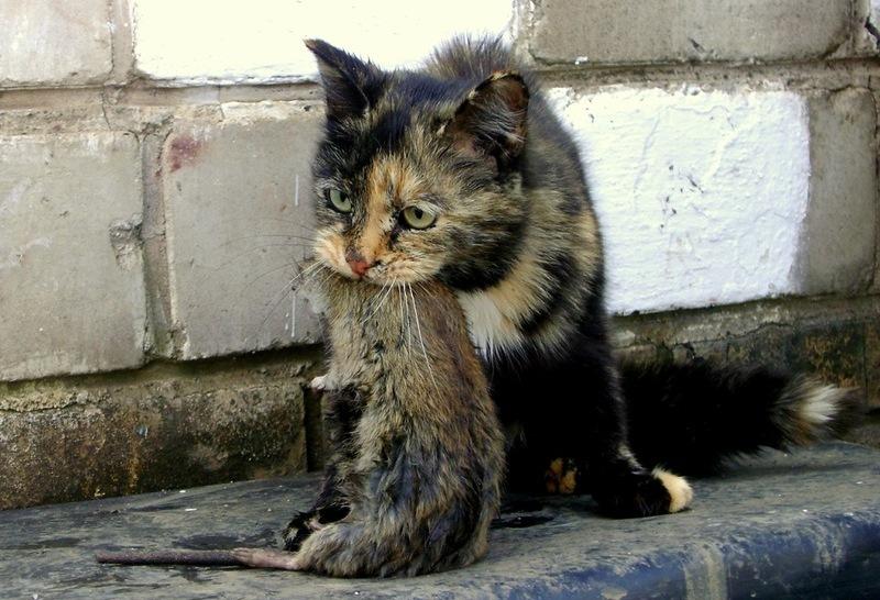 Марш за права тварин відбувся одночасно в 24 містах України - Цензор.НЕТ 3868